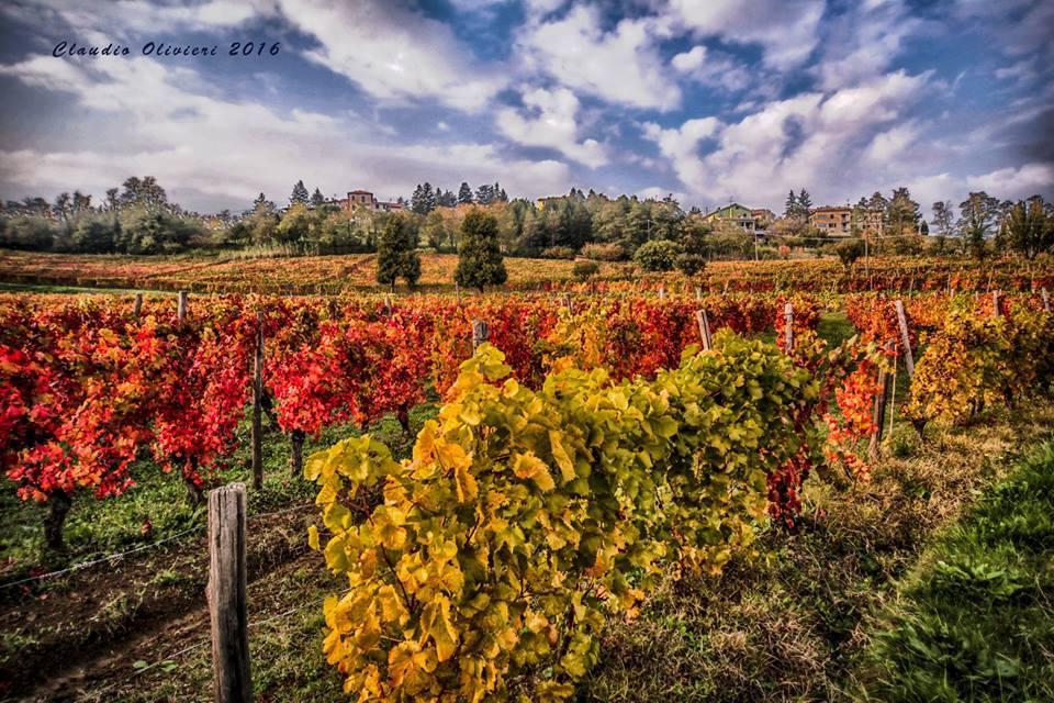 Foliage: quando i colori delle foglie diventano un itinerario da scoprire