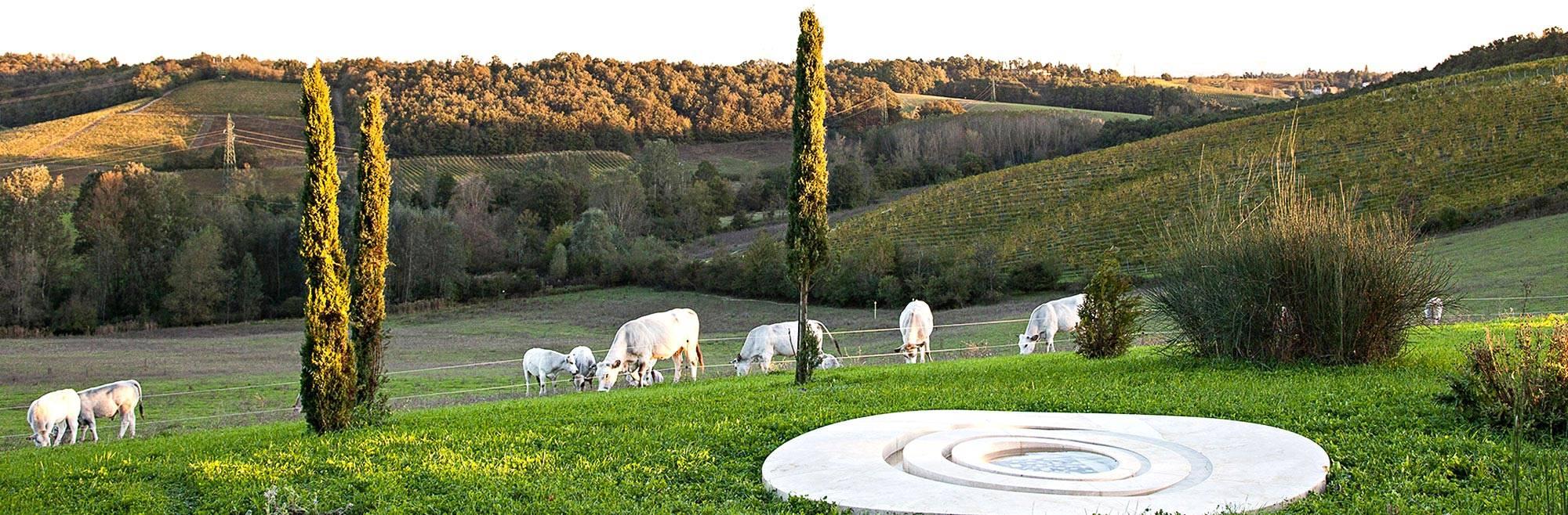111 luoghi di Langhe, Roero e Monferrato da scoprire