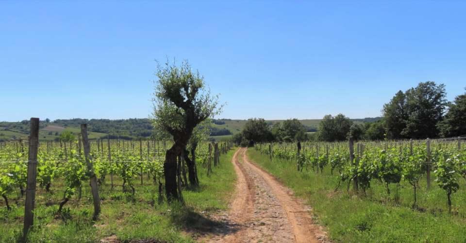 Vino Via: il cammino tra le vigne